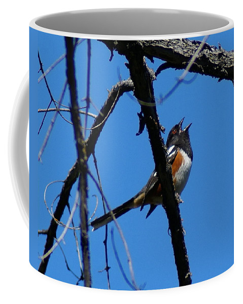 Birds Coffee Mug featuring the photograph A Spotted Towhee mid-Song by Ben Upham III