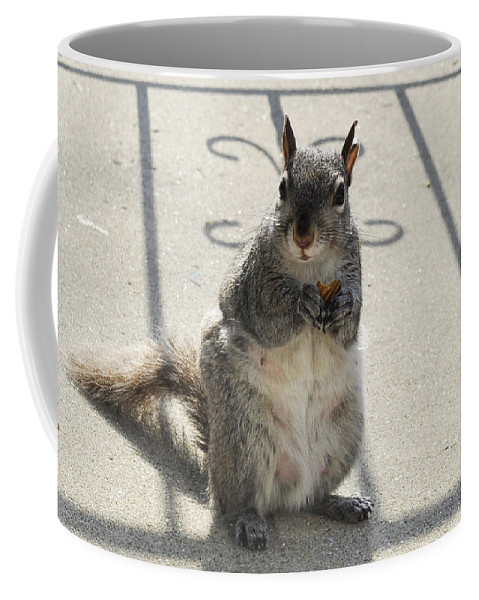 Squirrel Coffee Mug featuring the photograph A Squirrel Known As Chippy by Verana Stark
