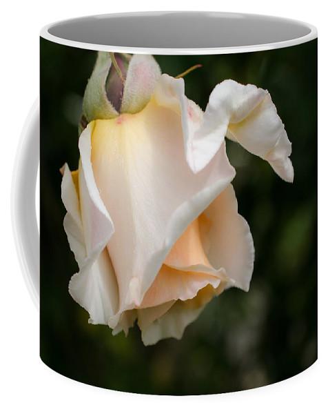 A Unique Beauty Coffee Mug featuring the photograph A Unique Beauty - Flower Art by Jordan Blackstone