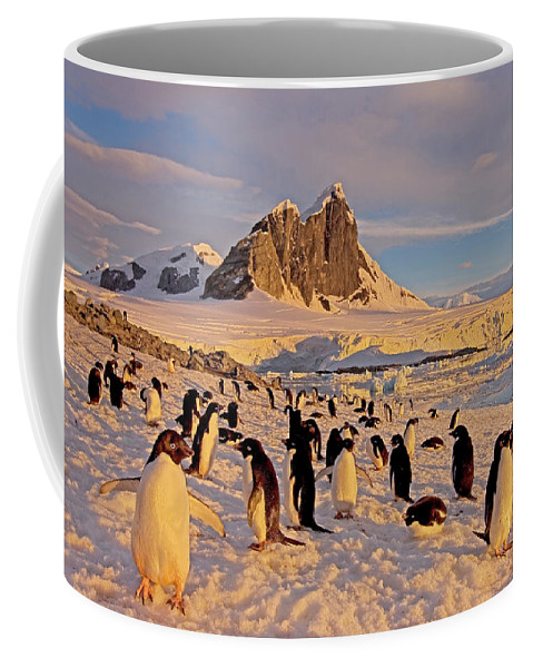 Adelie Penguin Coffee Mug featuring the photograph Adelie Penguin, Pygoscelis Adeliae by Steven J. Kazlowski / GHG