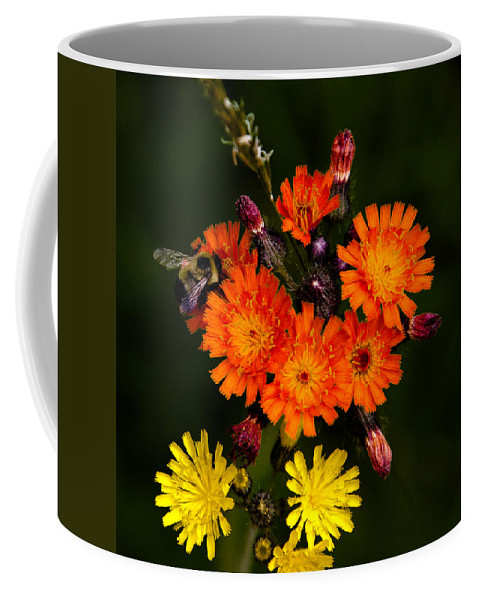 Mountain Meadows Coffee Mug featuring the photograph Adirondack Flowers by David Patterson