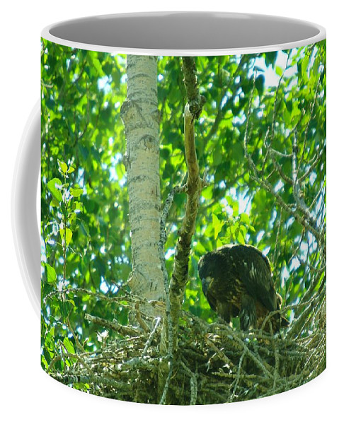 Wildlife Coffee Mug featuring the photograph Adolescent Eagle Eating A Fish by Jeff Swan
