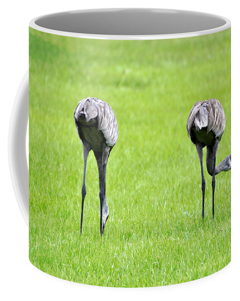 Two Coffee Mug featuring the photograph Adult Florida Sandhill Cranes Grus Canadensis Pratensis I Usa by Sally Rockefeller
