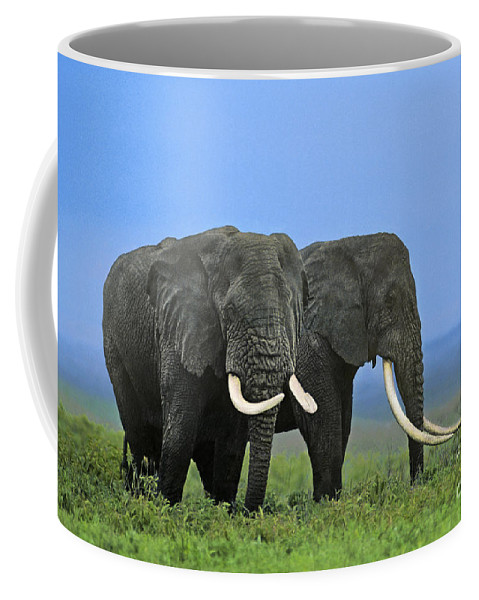 Africa Coffee Mug featuring the photograph African Bull Elephants In Rain Endangered Species Tanzania by Dave Welling