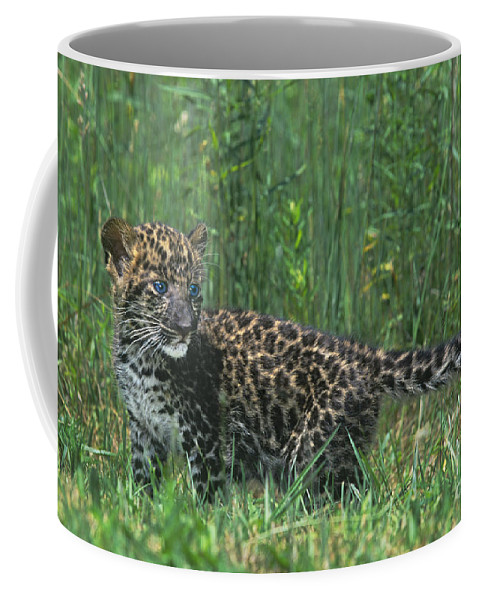 Africa Coffee Mug featuring the photograph African Leopard Cub In Tall Grass Endangered Species by Dave Welling