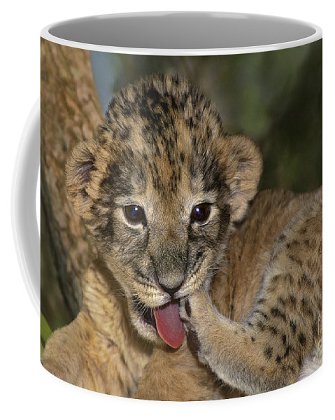 African Lion Coffee Mug featuring the photograph African Lion Cub Wildlife Rescue by Dave Welling