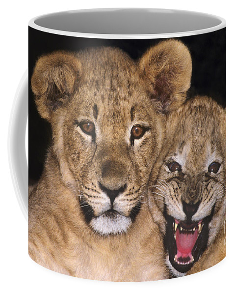 African Lions Coffee Mug featuring the photograph African Lion Cubs One Aint Happy Wldlife Rescue by Dave Welling