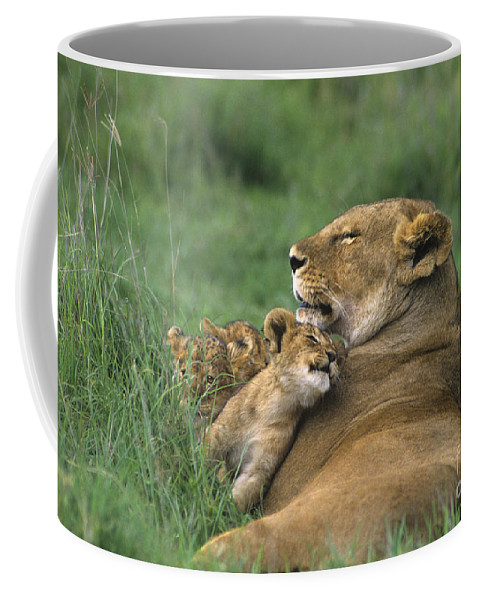 Africa Coffee Mug featuring the photograph African Lions Mother And Cubs Tanzania by Dave Welling