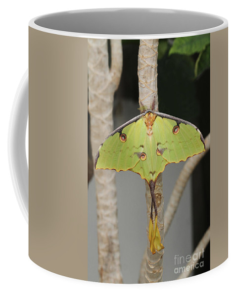 African Moon Moth Coffee Mug featuring the photograph African Moon Moth by Judy Whitton