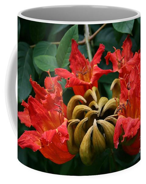 Aloha Coffee Mug featuring the photograph African Tulip Tree by Sharon Mau