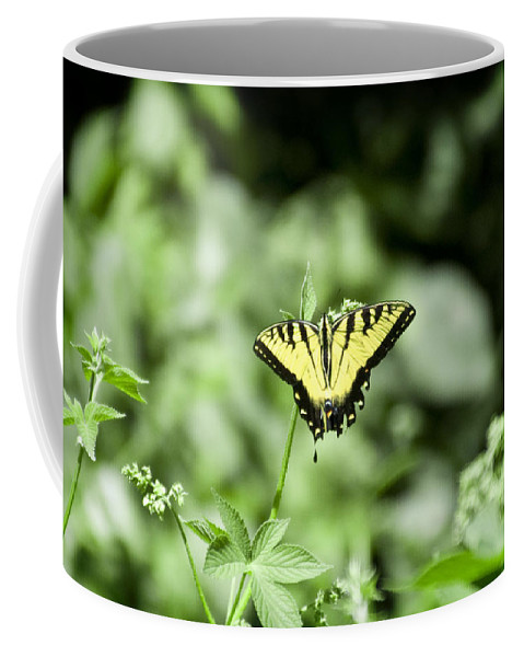 Afternoon Coffee Mug featuring the photograph Afternoon Butterfly by Bill Cannon