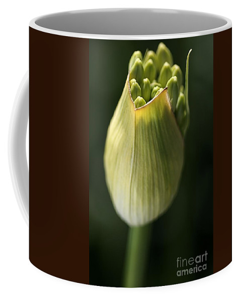 Flower Coffee Mug featuring the photograph Agapanthus In The Daylight by Joy Watson