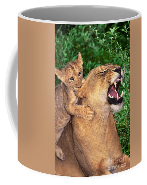 African Lions Coffee Mug featuring the photograph Ah Being A Mother Is Wonderful African Lions Wildlife Rescue by Dave Welling