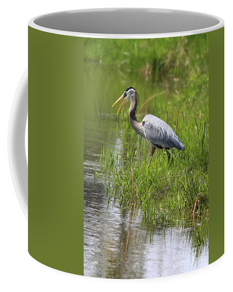 Bird Coffee Mug featuring the photograph Ah That Tastes Good by Deborah Benoit