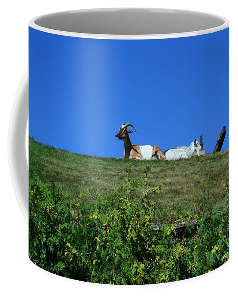 Al Johnsons Coffee Mug featuring the photograph Al Johnsons Resturant Goats by Tommy Anderson