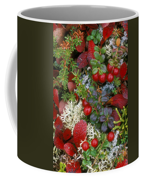 Cowberries Coffee Mug featuring the photograph Alaskan Berries 2 by Arterra Picture Library