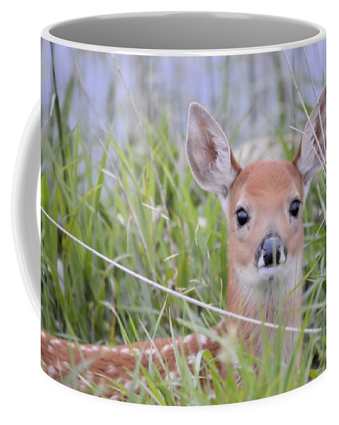 Deer Coffee Mug featuring the photograph Alert by Bonfire Photography