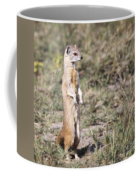 Yellow Mongoose Coffee Mug featuring the photograph Alert Yellow Mongoose by Liz Leyden