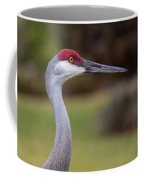 Sandhill Crane Coffee Mug featuring the photograph All-seeing Eye by John M Bailey
