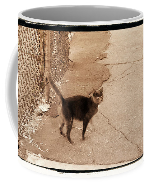 New York Coffee Mug featuring the photograph Alley Cat by Donna Blackhall