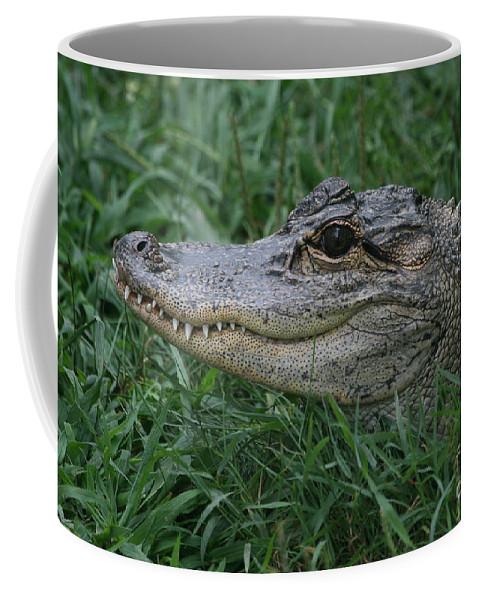 Alligator Coffee Mug featuring the photograph Alligator by Ken Keener