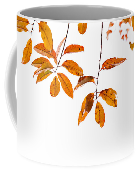 Leaves Coffee Mug featuring the photograph Almost Time by Karol Livote
