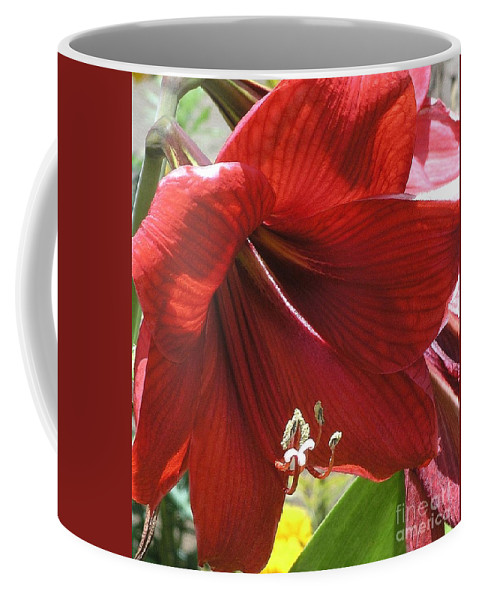 Amaryllis Coffee Mug featuring the photograph Amaryllis by Mary Deal