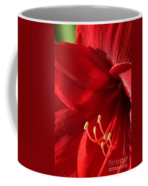 Flower Coffee Mug featuring the photograph Amaryllis6782 by Gary Gingrich Galleries