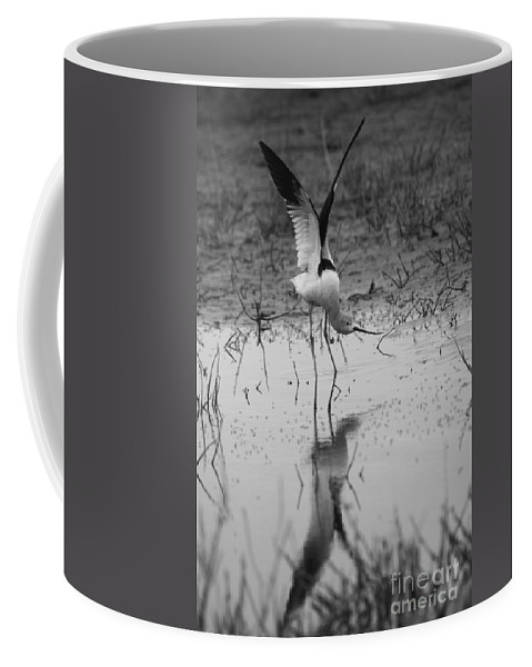 American Avocet Coffee Mug featuring the photograph American Avocet Reflection by John F Tsumas