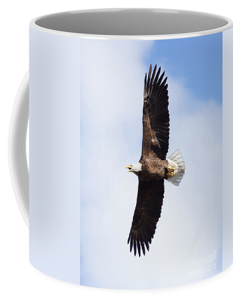 Eagle Coffee Mug featuring the photograph American Bald Eagle by Lori Tordsen