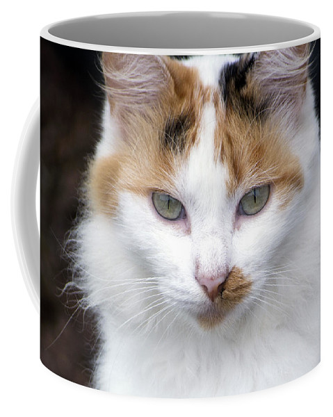 Horizontal Coffee Mug featuring the photograph American Calico Cat Portrait by Sally Rockefeller