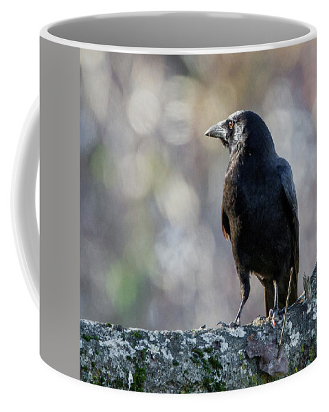 Crow Coffee Mug featuring the photograph American Crow Square by Bill Wakeley