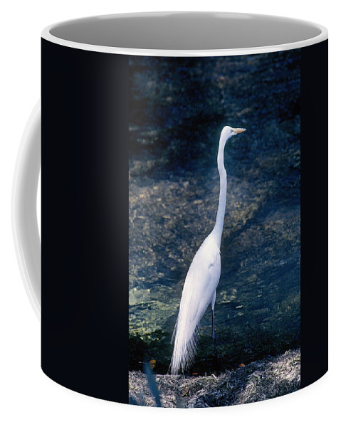 American Coffee Mug featuring the photograph American Egret I by Buddy Mays