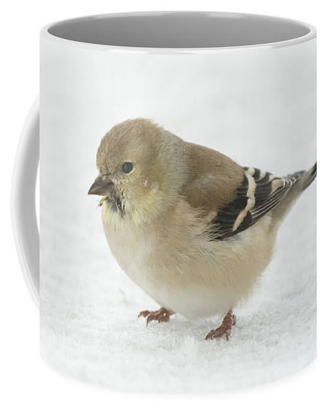 Jan Holden Coffee Mug featuring the photograph American Goldfinch In The Snow by Jan M Holden