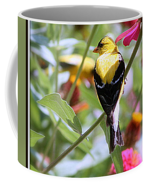 American Coffee Mug featuring the photograph American Goldfinch by Kay Novy