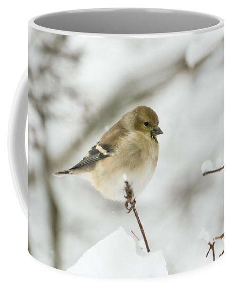 Jan Holden Coffee Mug featuring the photograph American Goldfinch Up Close by Jan M Holden