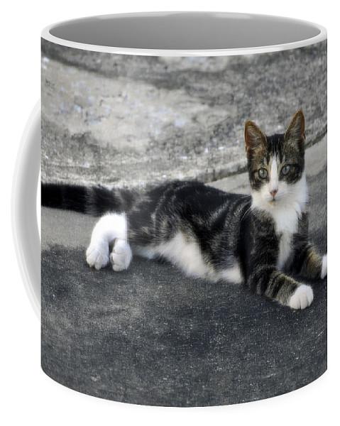 Horizontal Coffee Mug featuring the photograph American Grey Tiger Stripe Kitten Portrait by Sally Rockefeller