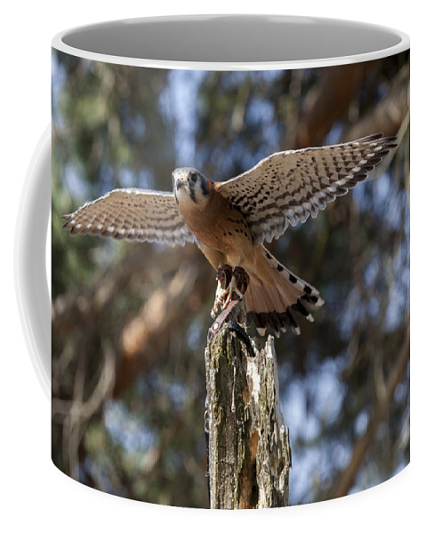 Agile Coffee Mug featuring the photograph American Kestrel by Jack R Perry
