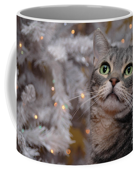 american Shorthair Coffee Mug featuring the photograph American Shorthair Cat With Holiday Tree by Amy Cicconi