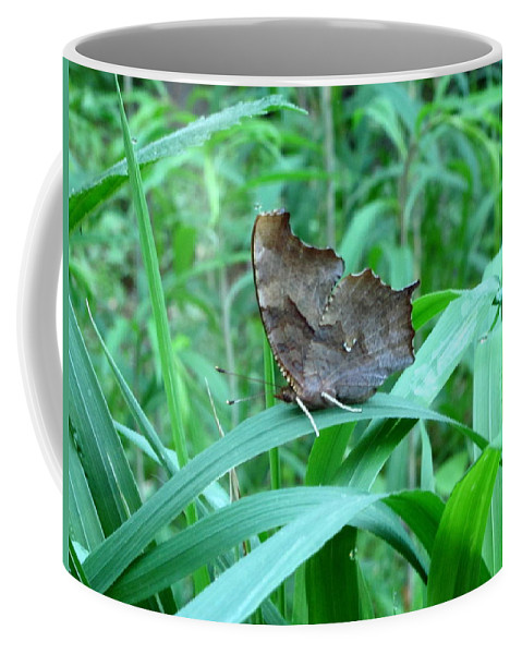 American Snout Butterfly Images Butterflies Of Maryland Images Butterfly Diversity American Snout Photograph Prints Forest Ecostystem Biodiversity Forest Butterfly Prints Leaf Winged Butterfly Nature Bowelys Quarters Maryland Butterfly Pictures Coffee Mug featuring the photograph American Snout Butterfly by Joshua Bales