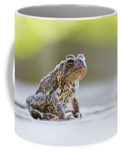 Frog Coffee Mug featuring the photograph American Toad by Mircea Costina Photography