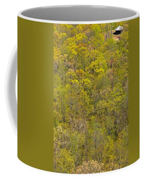 Trees Coffee Mug featuring the photograph Among The Trees by Karol Livote