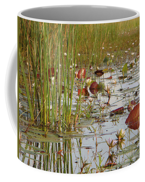 Karen Zuk Rosenblatt Art And Photography Coffee Mug featuring the photograph Among The Waterlillies 2 by Karen Zuk Rosenblatt