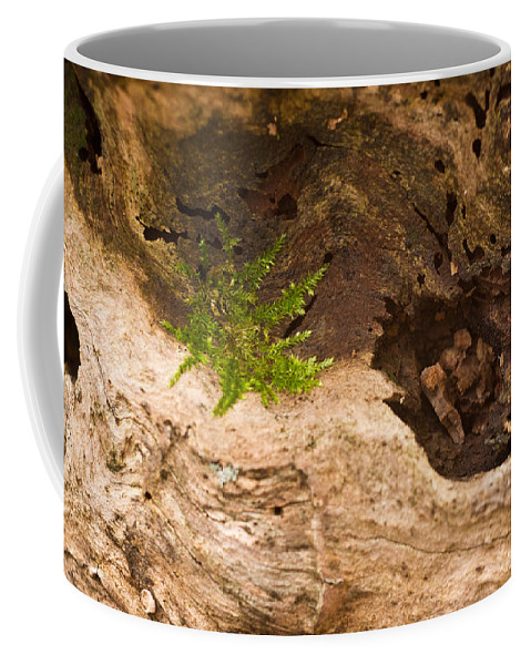 Moss Coffee Mug featuring the photograph An Isolated Moss Plant by Douglas Barnett