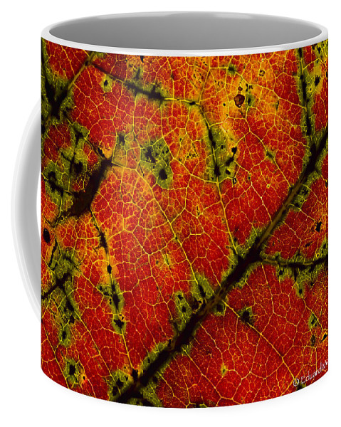 Fall Coffee Mug featuring the photograph Anatomy of the fall... by Eduard Moldoveanu