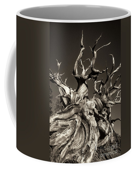 American Coffee Mug featuring the photograph Ancient Bristlecone Pine In Black And White by Dave Welling