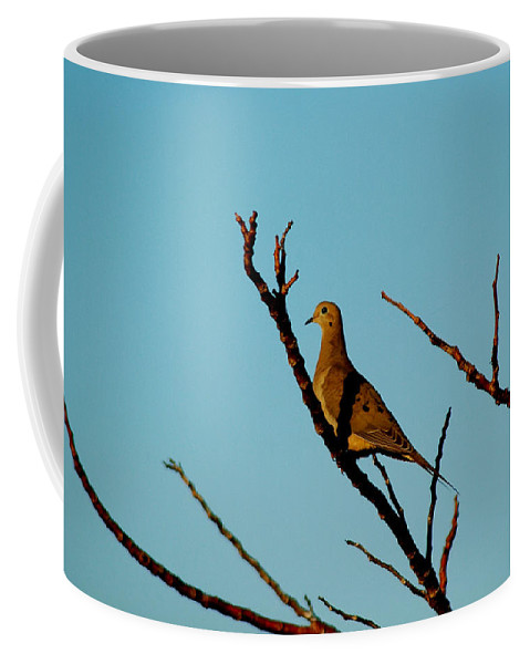 Bird Coffee Mug featuring the photograph And A Dove In A Tree by David Weeks