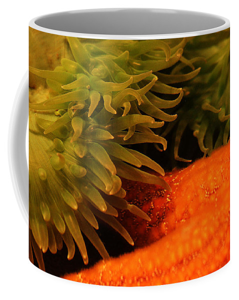 Anenome Coffee Mug featuring the photograph Anenome And Starfish by Robert Woodward