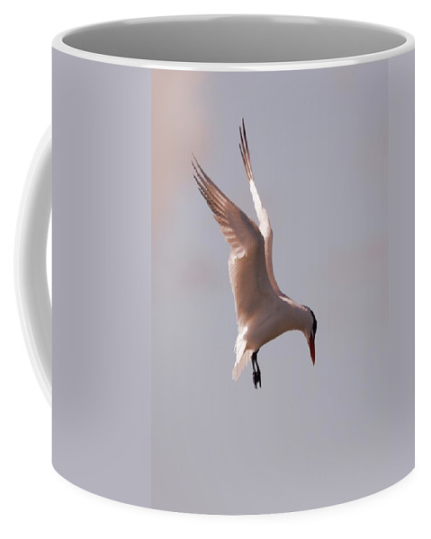 Tern Coffee Mug featuring the photograph Angel From On High by Charles Owens