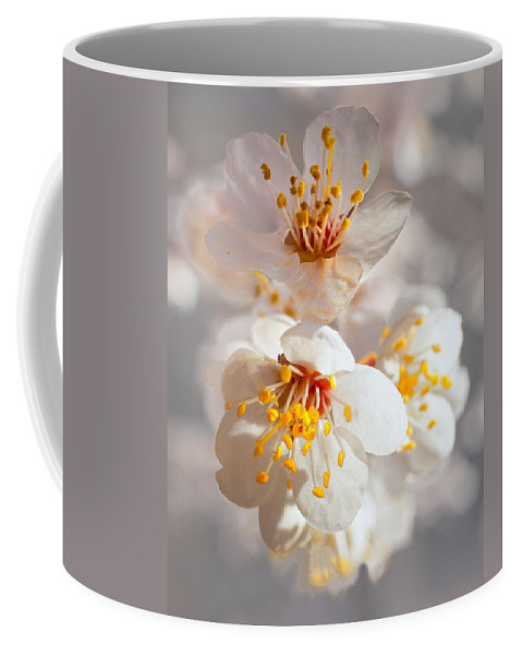 Apricot Coffee Mug featuring the photograph Apricot Blooms by Diana Powell